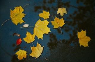 autumn-1042956_1280